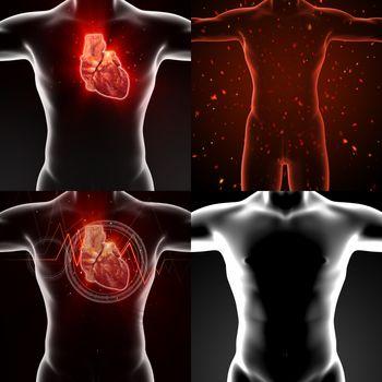3D rendering medical illustration of a human heart