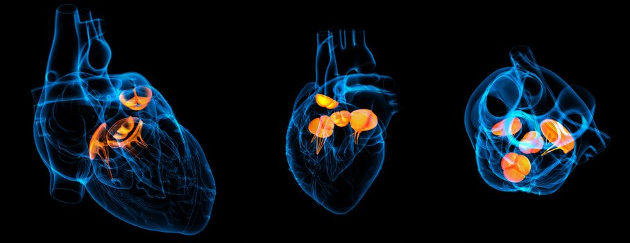 3d render illustration of the  Heart valve