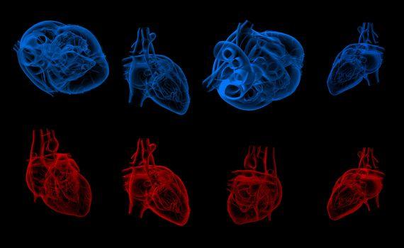 3d render illustration of the human heart
