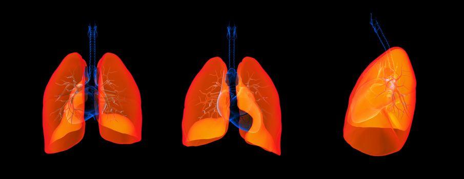 3D render illustration of the lung