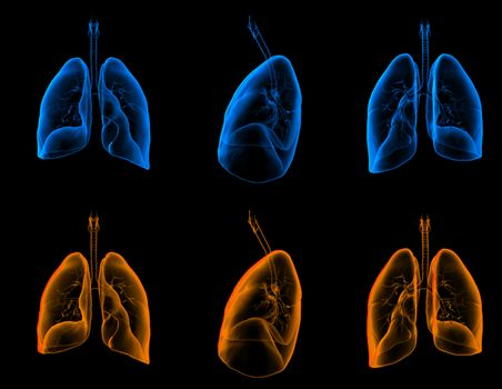 3D medical illustration of the lungs
