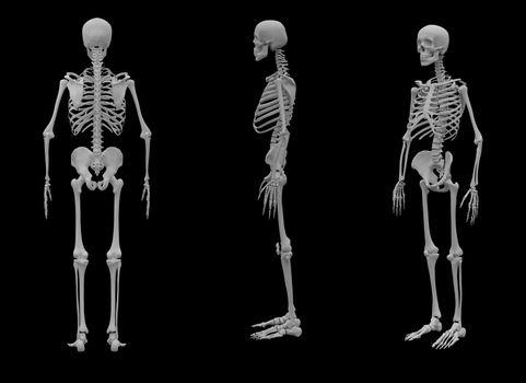 3d rendered Skeleton on black background
