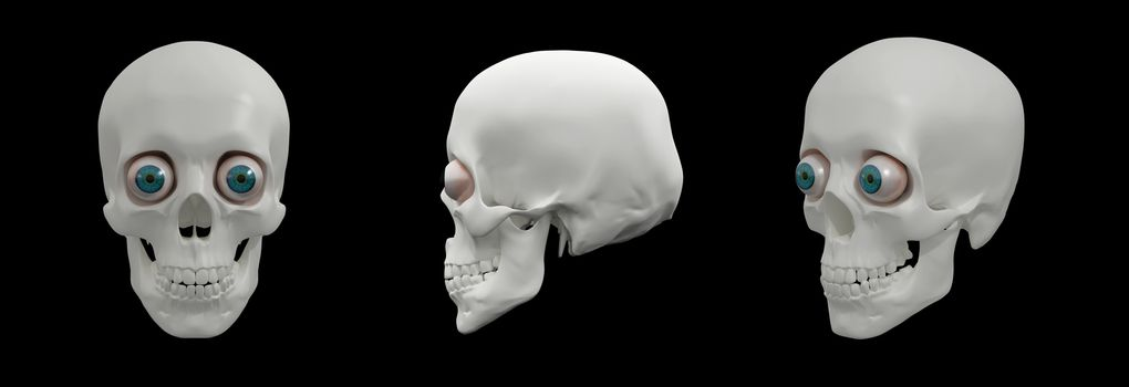 3d render illustration of the human Skull