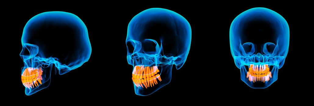 3d render human x ray skull on black background