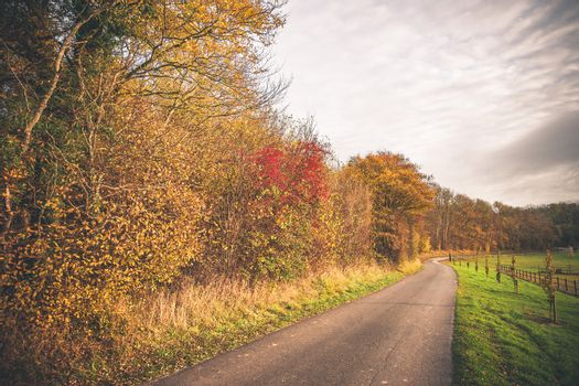Countryside landscape in the fall with a small road surrounded by trees in autumn colors and green fields