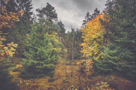 Autumn scenery in a Scandinavian forest