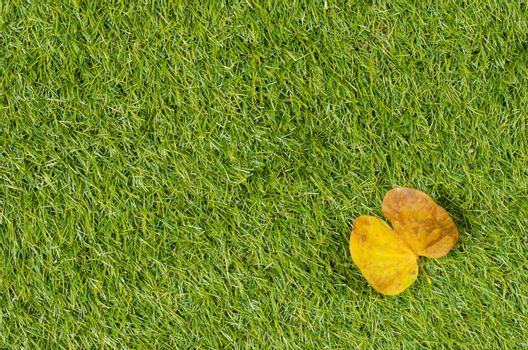 Background and Textured, Yellow Leaves Laying on Fresh Spring Green Grass Textured