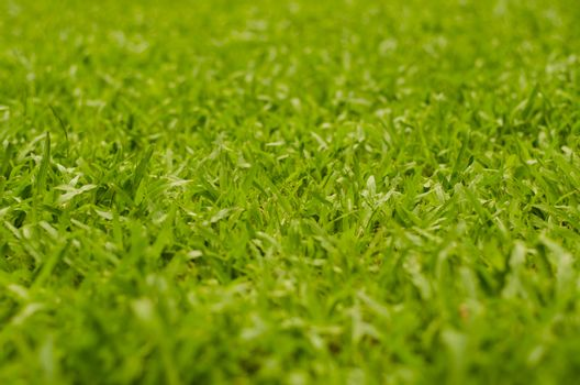 Abstract natural backgrounds grass blur
