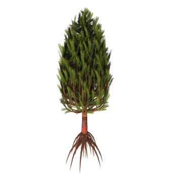Asterophyllites plant lived during the Carboniferous Period and grew into a tall large tree.