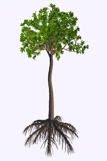 Glossopteris was a seed plant tree that lived in the Permian to the Triassic Periods.