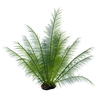 Onychiopsis was a Cretaceous fern with fine feathery fronds and lived on forest edges, lake and river borders and humid plains.