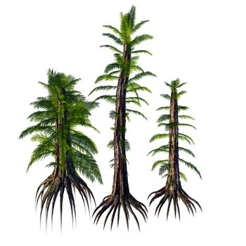 Tempskya is an extinct genus of tree-like fern that lived during the Cretaceous Period.