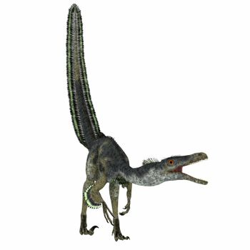 Velociraptor was a carnivorous theropod dinosaur that lived in Mongolia, China in the Cretaceous Period.