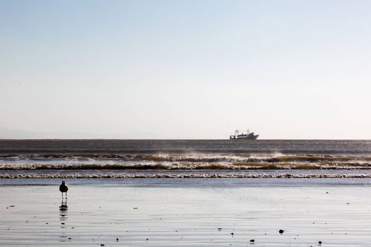 Fishing boat returning from the cruise. Low anggle and long distance view. Low horizon, white space on top. Essaouira, Morocco