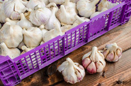 Bio garlic from bio herbs garden