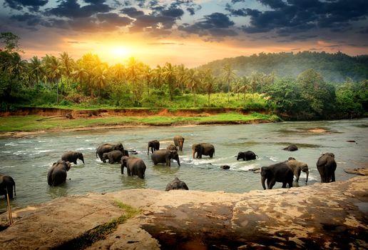 Elephants in jungle