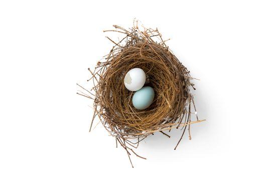 broken eggs in bird nest