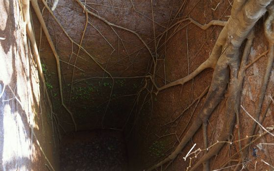 Ancient deep well with roots of banyan tree. India. Goa, Portugal fort. Natural light and colors