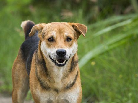 Image of a dog on nature background. Pet. Animal