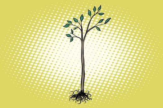 tree seedling with green leaves