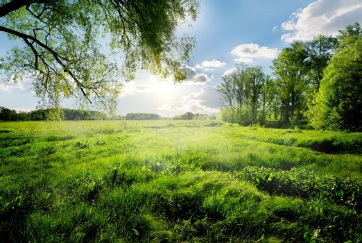Spring forest against the background of a green field