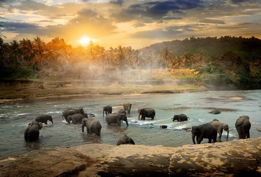 Herd of bathing elephants in the river of jungle