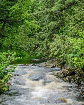 Rosseau River Portrait