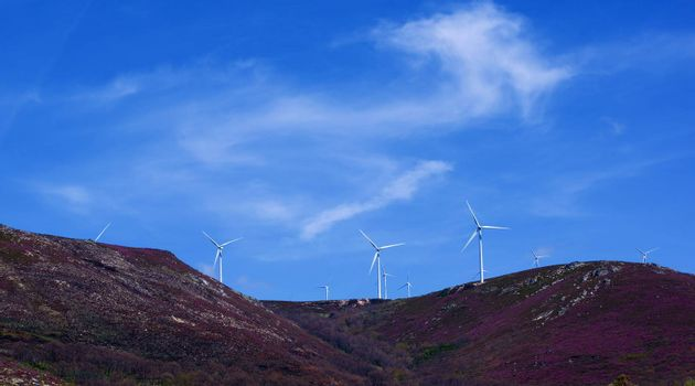 White Electrical Power Generating Wind Turbines on Lavender Hills agains Blue Skies background Outdoors. Castile and Leon, Spain