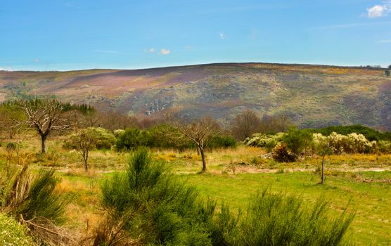 Portuguese Rustic Landscape with Green Grass, Various Shrubs and Small Olive Trees on Hills and Blue Sky background in Sunny Day Outdoors