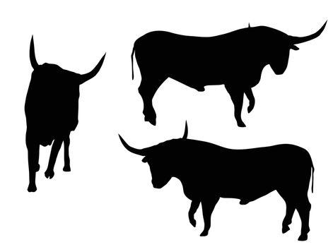 EPS 10 vector illustration of bull silhouette