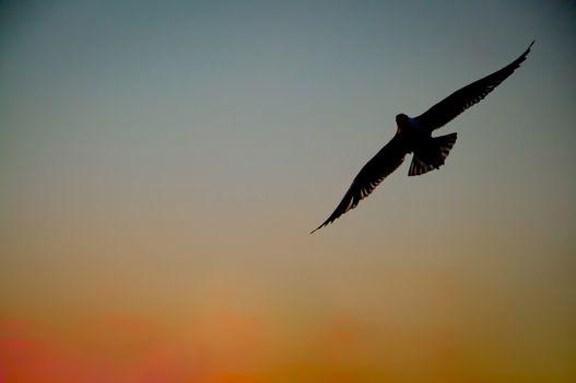 seagulls flying on the beach sunset.