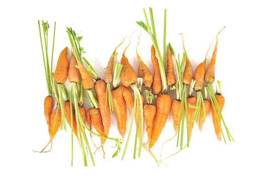 carrots close up isolated on white background