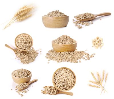 Ear of barley sets on white background