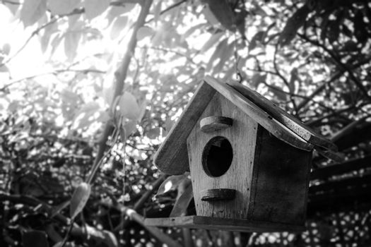 home of bird, house forest.