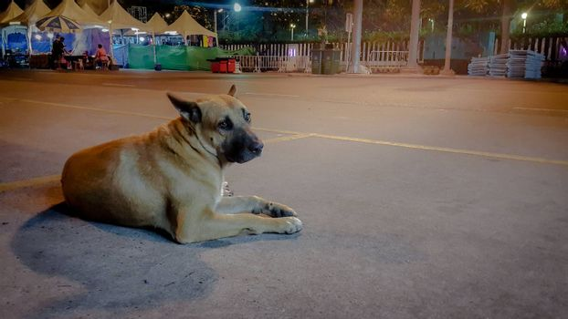 dog feels alone laying on the way.