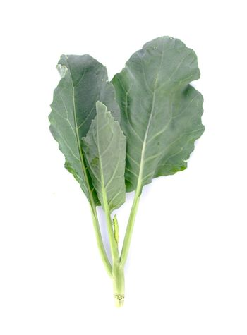 Chinese kale vegetable on white background