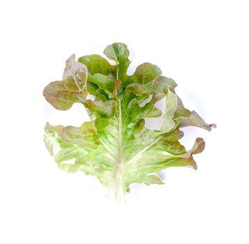 leaf lettuce close up on white.