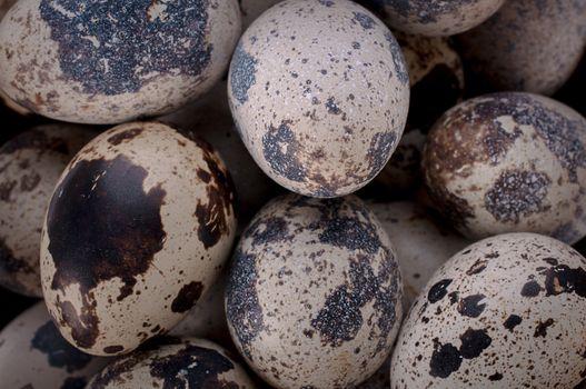 Quail egg close up on white background.