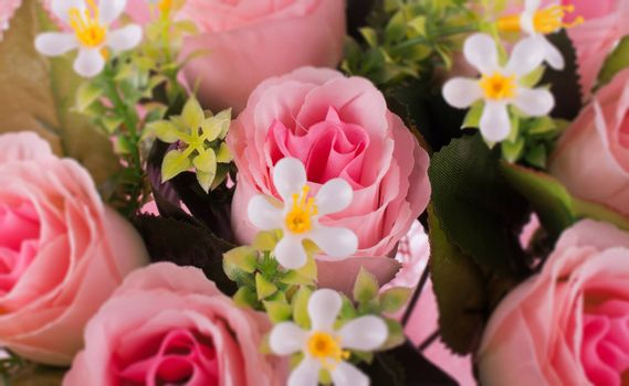 rose flowers close up on background.