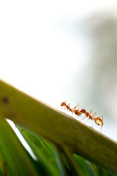 ant wildlife on leaf backgrpund.