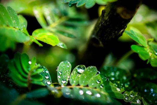 water drops in fresh garden.