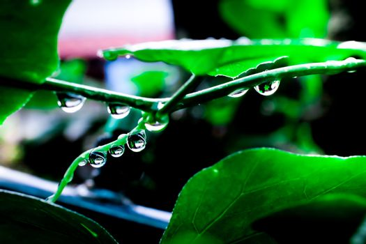 water drops in fresh garden.