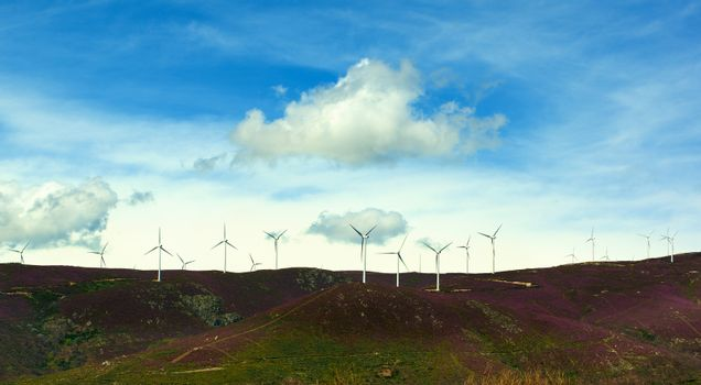 White Electrical Power Generating Wind Turbines on Lavender Hills agains Blue Sky with White Clouds background Outdoors. Castile and Leon, Spain