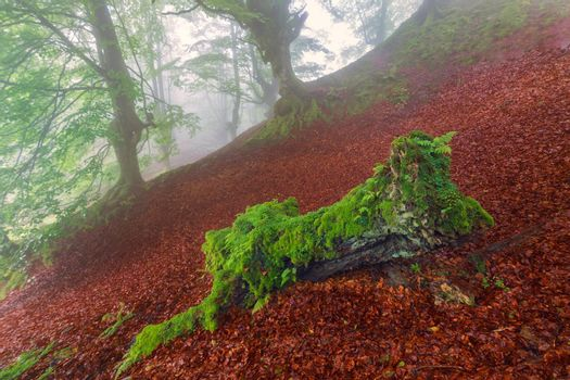 Green on red, misty forest