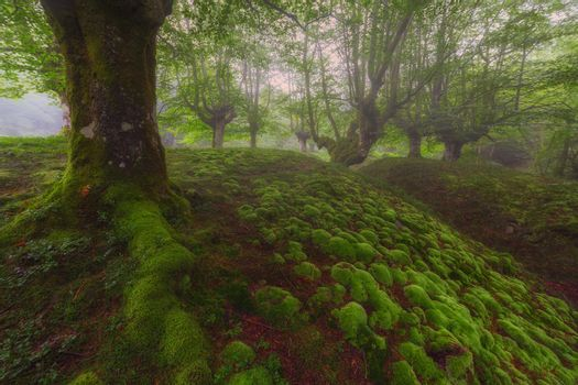 Green bubbles in a foggy forest