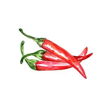Watercolor Hot Chili Pepper. Hand Drawn Illustration Organic Food Vegetarian Ingredient