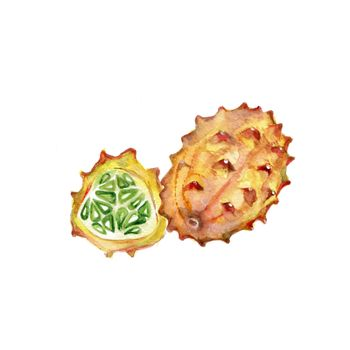 Watercolor Kiwano. Hand Drawn Illustration Organic Food Vegetarian Ingredient