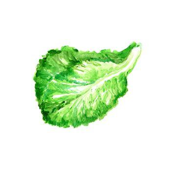 Watercolor Salad Leaf, Fresh Lettuce. Hand Drawn Illustration Organic Food Vegetarian Ingredient