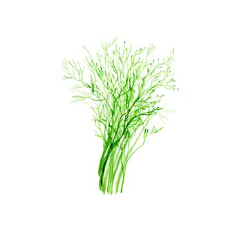 Watercolor Dill. Hand Drawn Illustration Organic Food Vegetarian Ingredient