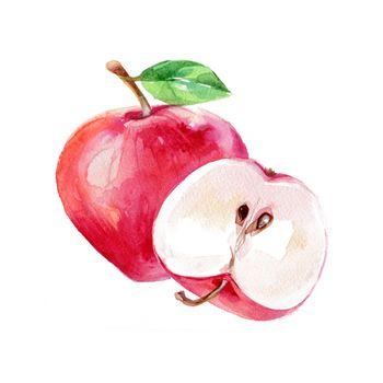 Watercolor Apple. Hand Drawn Illustration Organic Food Vegetarian Ingredient